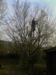Fachgerechter Schnitt eines Obstbaumes
